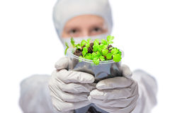 Seedlings in the hands the biologist in protective suit Royalty Free Stock Photography