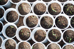 Seedlings hive cups Royalty Free Stock Images