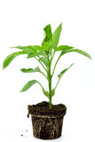 Seedlings illustrating the concept of new life-cap Royalty Free Stock Images