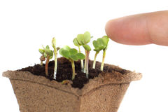 Free Seedlings In The Earth, Fingers Touching The Young Shoot Of The Plant Stock Photo - 89425790