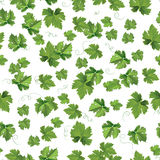 Seedlings leaves seamless vector pattern Stock Image