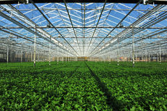 Seedlings na estufa fotografia de stock royalty free