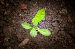 Seedlings in new life Royalty Free Stock Photography