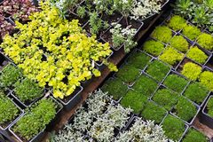 Seedlings nursery Stock Photography