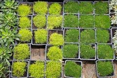 Seedlings nursery Stock Photography