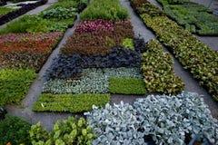 Seedlings nursery garden Royalty Free Stock Images
