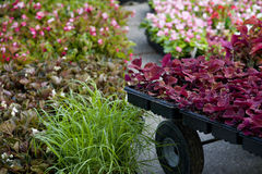 seedlings nursery garden Stock Photo