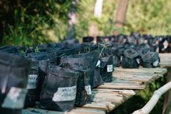 Seedlings of plants in anticipation of replanting. royalty free stock images
