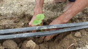 The seedlings of plants planted in the soil. Stock Photos