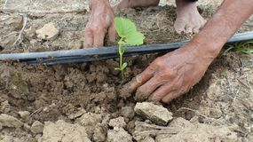 The seedlings of plants planted in the soil. Stock Photo
