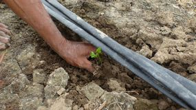 The seedlings of plants planted in the soil. Stock Images