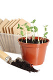 Seedlings in pot. Garden scoop and seed packets, isolated on white background Royalty Free Stock Images
