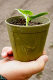 Seedlings in pots. Gardener's hands with seedlings in pots. Farm soil background Stock Images