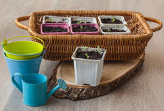 Seedlings  in pots on a wooden table Stock Photography