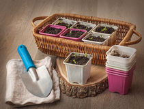 Seedlings  in pots on a wooden table Royalty Free Stock Image