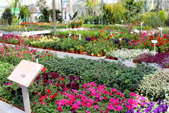 Seedlings of seasonal flower Royalty Free Stock Photo