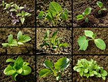 Seedlings set Royalty Free Stock Photos