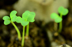 Seedlings of some vegetables. Stock Photos
