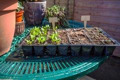 Seedlings on table Stock Photo