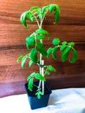 Seedlings of tomato stock image