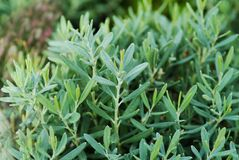 Seedlings trees Royalty Free Stock Photos