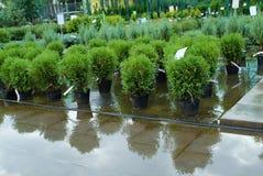 Seedlings trees Stock Image