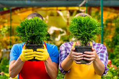 Seedlings of trees in the hands. Of experienced gardeners Stock Images