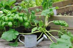 Seedlings of vegetable Royalty Free Stock Photos
