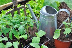 Seedlings in vegetable garden Royalty Free Stock Photos