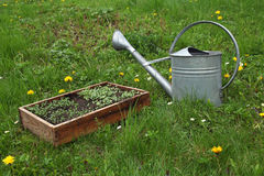 Seedlings and watering can Royalty Free Stock Photo