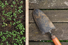 Seedlings in a wooden box and gardering tool Royalty Free Stock Photography