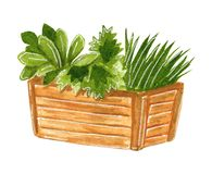 Seedlings in wooden box, hand drawn watercolor illustration vector illustration