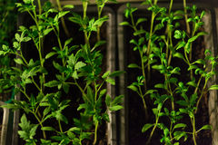 Seedlings. Young plant seedlings on ground Royalty Free Stock Images