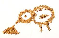 Seeds äta för fågel Fotografering för Bildbyråer