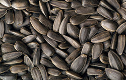 Seeds Stock Image