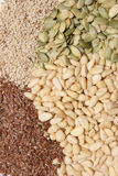 Seeds. A selection of different seeds royalty free stock photos