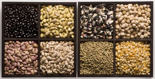 Seeds. Eight different kind of seeds royalty free stock image