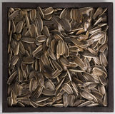 Seeds. Sunflower seeds in a square container royalty free stock images