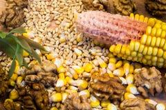 seeds Stockfotografie