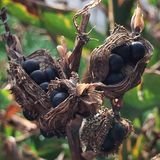 seeds Lizenzfreies Stockfoto