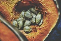 seeds Lizenzfreie Stockfotografie