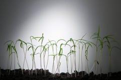 Seeds Stock Photos