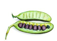 seeds Stockfoto