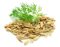 Seeds And A Fennel Branch Stock Photography