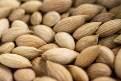Seeds of the apricot close up horizontal Royalty Free Stock Photos