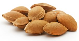 Seeds of apricot Royalty Free Stock Photo