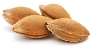Seeds of apricot Stock Images