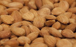 Seeds of apricot. Selective Focus Royalty Free Stock Image