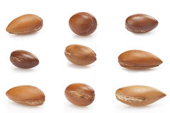 Seeds of argan on white,a close up on white background Royalty Free Stock Image