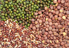 Seeds background. Collection of seeds ready for sprouting stock image